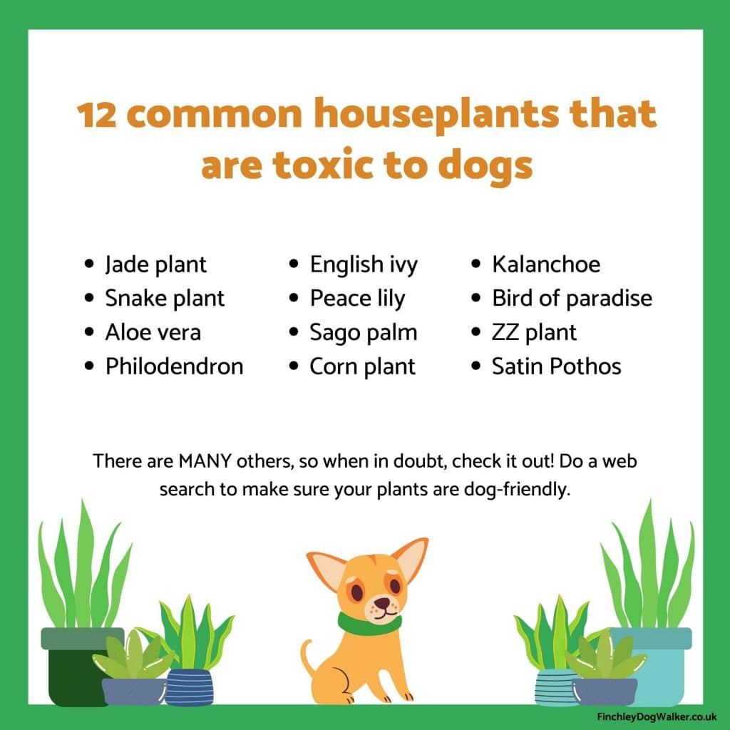 Copy-of-12-common-houseplants-that-are-toxic-to-dogs-1024x1024 Pet Proofing Your Home