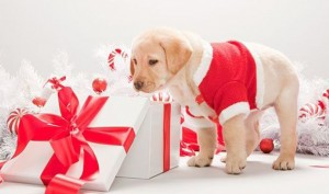 dog-christmas-300x177  How to treat your dog this Christmas