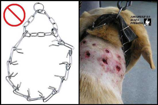 prong_collar Pinch / Prong  collars  – the truth about them and their use.