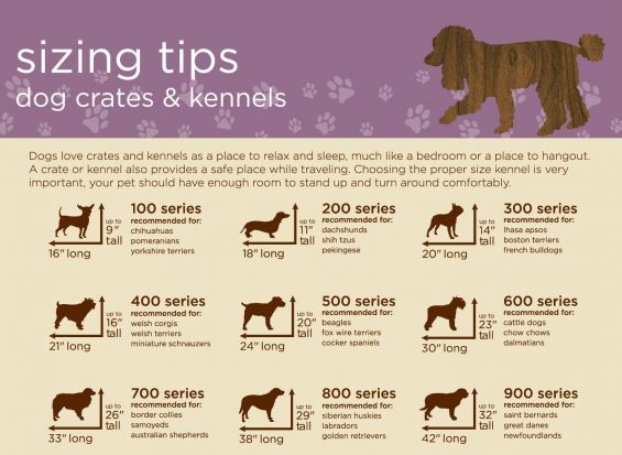 why-use-dog-crate-L-DN3kRK Crates and crate training