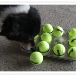 Quick and Easy Dog Games using objects around the house