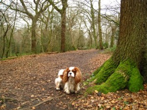 north-london-dog-walks-highgate-300x224 Where We Walk