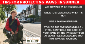 paws-and-pavments-19-300x157 Dogs Paws & Pavements