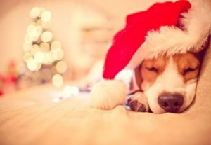 merry_christmas_fido-300x207 Giving your Dog a Stress Free Christmas