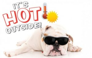 summer-heat-pet-safety-tips-300x189 Safe Tips  for Hot Weater