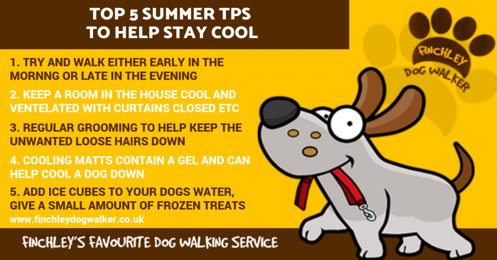 summer-infographic-1024x536 5 Tips to Keep A Dog Cool this summer