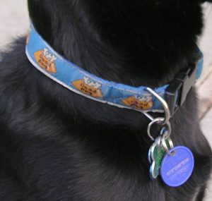 dog-collar-tag-300x285 How important is it for your dog to wear a house collar with a name tag?