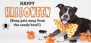 happy_halloween-300x142 Tips to make Halloween safer for your dog
