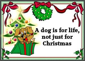 dog-for-christmas-300x214 A dog is for life – not just for Christmas!
