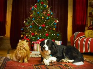 christmas-tree-with-cat-or-dog-300x225 Protect your dog from these Christmas hazards and dangers