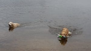 11070802_10205945738387396_1416803899643248990_n-300x169 How to help your dog cope with the summer heat