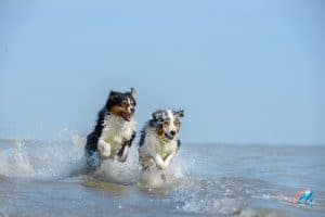 dogs-in-water-300x200 Bank Holiday Travelling with your dog
