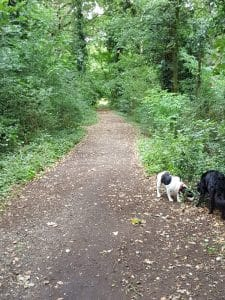 dog-walking-finchley-e1503259961628-225x300 Finchley to Muswell Hill