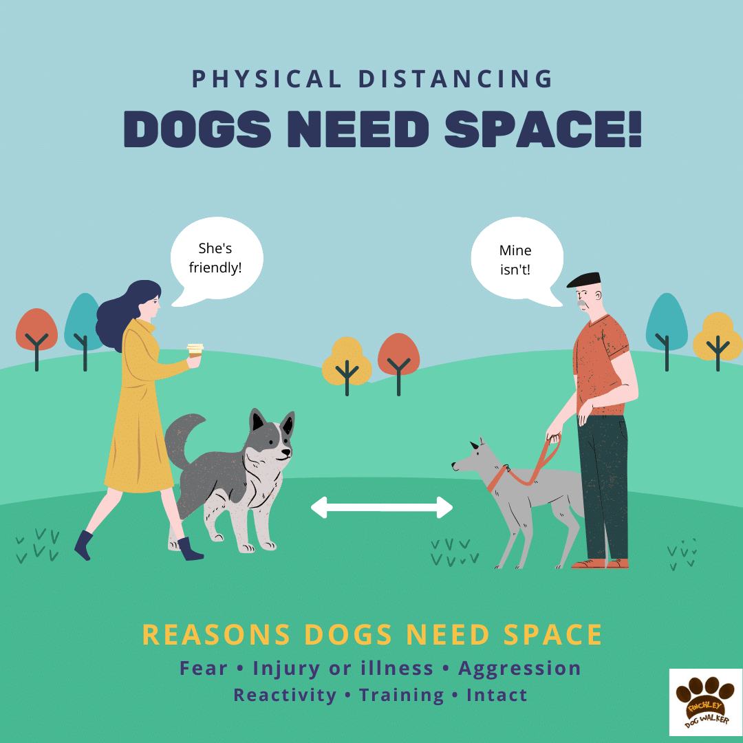 Copy-of-Dogs-need-space Some Dogs Need Space - ask before approaching