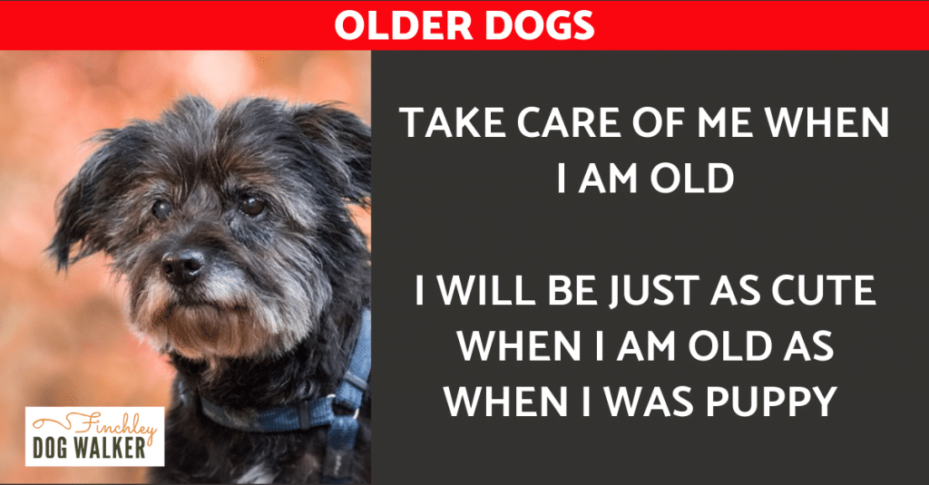 THE-older-dog-1024x535 Five signs of disease in older dogs