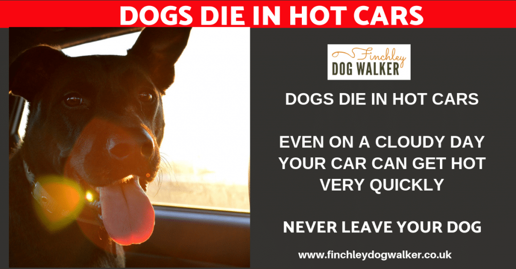 dogs-die-in-hot-cars-finchley-dog-walker-1024x535 Dogs Die in Cars