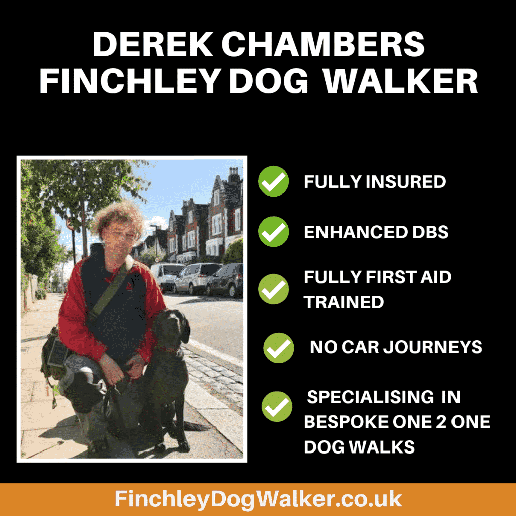 derek-chambers-finchley-dog-walker-1-1-1024x1024 A quick insight to life as a dog walker