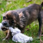 DIY Dog Toys for Enrichment