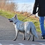 Dog theft whilst out walking - protecting yourself and your dog