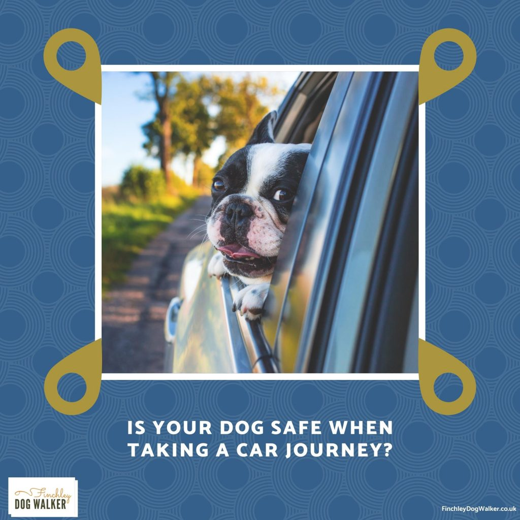 finchley-dog-walker-safe-car-travel-1024x1024 Tips to Keep Your Dog Safe When Taking a Car Journey