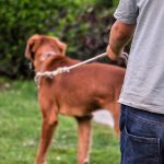 Dog walking etiquette for dog owners