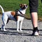 Dog Walking Tips Everyone Should Know