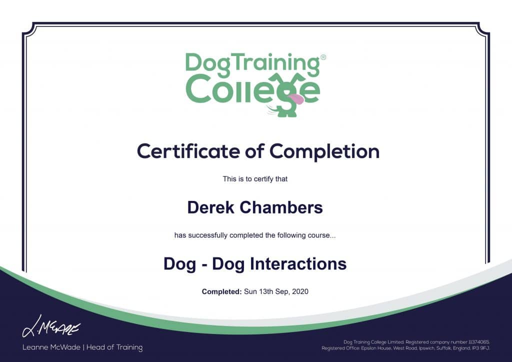 dog-on-dog-interactions-1024x724 Dog Training And Pet Care certificates