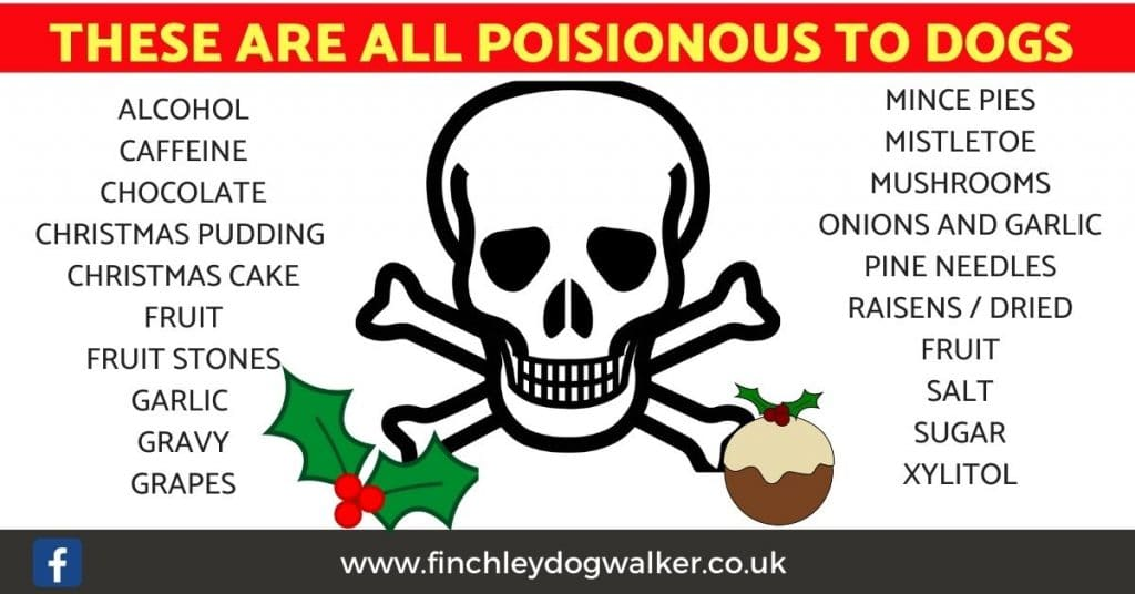 Copy-of-dog-poisons-template-1024x536 Tips to help your dog have a safe and happy Christmas