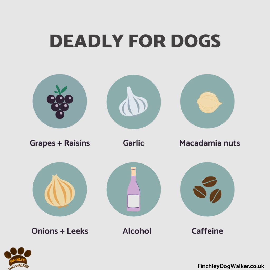 Deadly-for-dogs-foods-1024x1024 Toxic foods for dogs