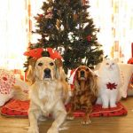 Tips to help your dog have a safe and happy Christmas