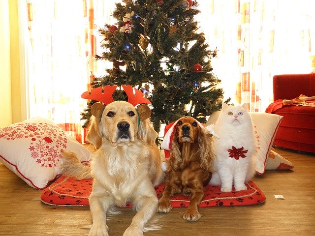 pets-962215_6401-1 Tips to help your dog have a safe and happy Christmas