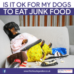 Is it ok for my dogs to eat junk food such as chips?