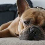Canine Enrichment: Keeping Your Dog Happy