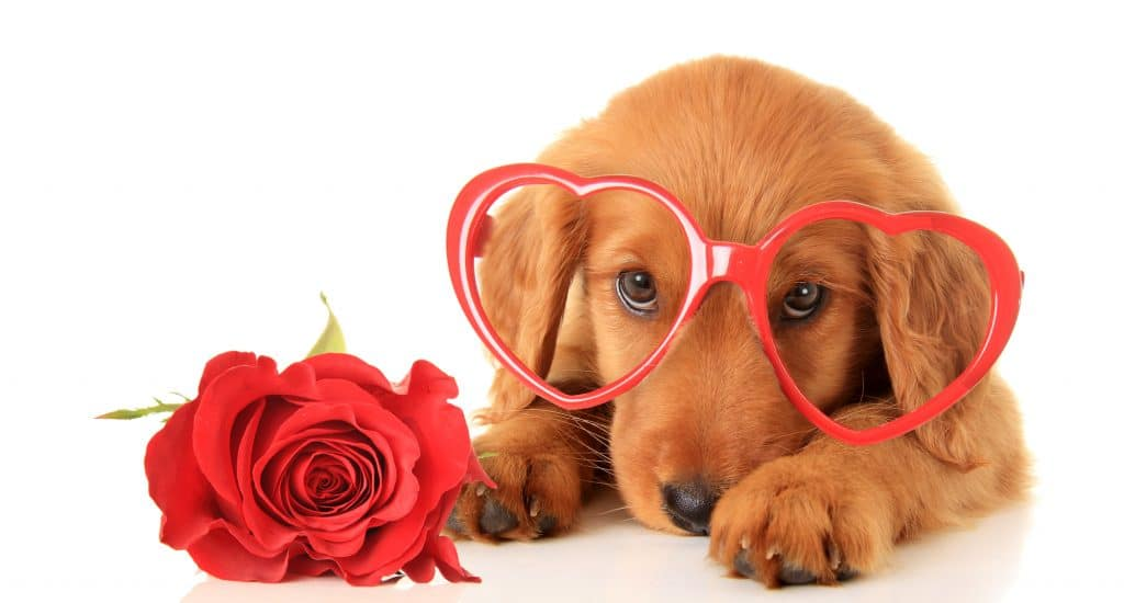 Depositphotos_95437446_l-2015-1024x550 How to spend Valentine's Day with your dog